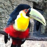 Photo taken at Dallas World Aquarium by  ℋumorous on 2/29/2012
