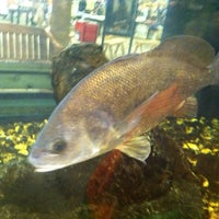 Photo taken at Bass Pro Shop by Becky S. on 6/4/2012