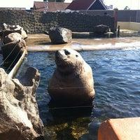 Photo taken at Dolfinarium by Onno D. on 8/1/2012