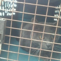 Photo taken at East Mesa Animal Hosp by Stephanie W. on 4/25/2012