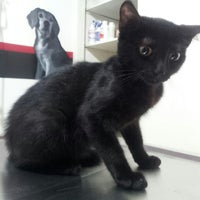 Photo taken at Clinica Veterinaria Animal Care by Emerson G. on 7/7/2012