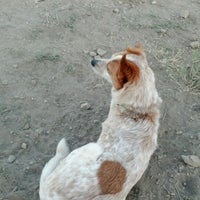 Photo taken at Foothills Community Dog Park by Andrew F. on 6/26/2012