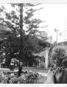 Alameda Caixaparah