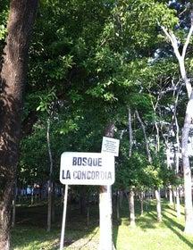 Bosque La Concordia