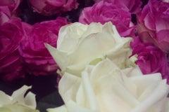 Планета цветов - Магазин цветов