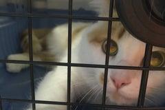 СКью-Лап / SQ-lap - Ветеринарная клиника