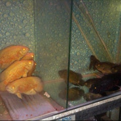 Photo taken at Aquarium 319 by Ferdian F. on 9/11/2012