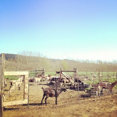 Photo taken at Harley Farms by Shannon Z. on 3/3/2012