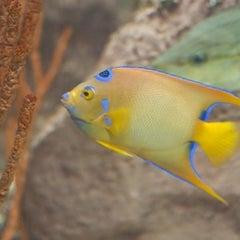 Photo taken at Texas State Aquarium by Matthew W. on 7/19/2011