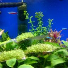 Photo taken at Pretty aquarium by Asnal A. on 12/4/2011
