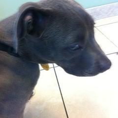 Photo taken at Shane Veterinary by Kristina K. on 5/8/2012