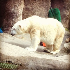 Photo taken at Oregon Zoo by ShawnaRR on 8/20/2012