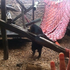 Photo taken at Colchester Zoo by Katie M. on 8/25/2013