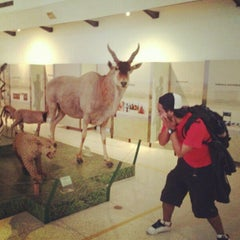 Photo taken at Museo de Ciencias Naturales de Caracas by Polar T. on 1/20/2013