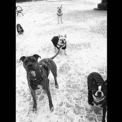Photo taken at Peter Detmold Park Dog Run by Katie N. on 1/29/2015