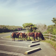 Photo taken at Assateague Island National Seashore (Maryland) by Adam G. on 6/28/2013
