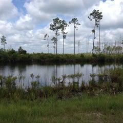 Photo taken at Okefenokee Swamp Park by Sandi P. on 7/6/2014