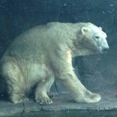 Photo taken at Polar Bear Odyssey At Como Park by Rebecca M. on 5/26/2014