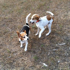 Photo taken at Wag Farms Dog Park by Darby H. on 10/18/2012