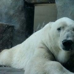 Photo taken at Polar Bear Odyssey At Como Park by Lillian M. on 6/8/2014