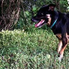 Photo taken at Shoal Creek Dog Park by Caitlyn B. on 6/26/2013