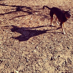 Photo taken at Shoal Creek Dog Park by Caitlyn B. on 11/29/2012