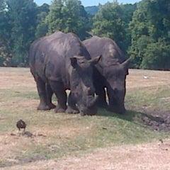 Photo taken at West Midland Safari & Leisure Park by Stephen B. on 7/17/2013