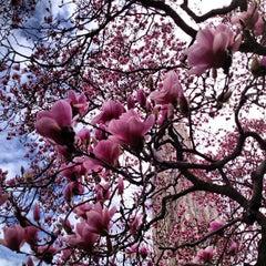 Photo taken at University of Pittsburgh by Olga M. on 4/14/2013