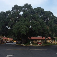 Photo taken at The Old Senator Tree by Venessa T. on 9/19/2012