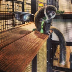 Photo taken at Duke Lemur Center by Steven P. on 1/6/2013