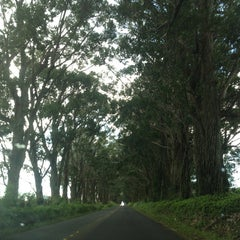 Photo taken at Tunnel Of Trees by tze c. on 12/19/2012