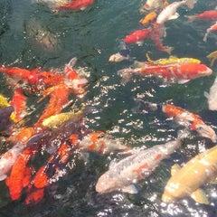 Photo taken at Tùng Sơn Thạch Hoa Viên - Rin Rin Park by Minh N. on 5/2/2015