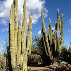 Photo taken at Desert Botanical Garden by Joe Y. on 12/19/2012