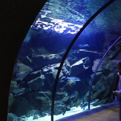 Photo taken at Acquario Civico by Gianluca M. on 10/27/2012