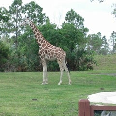 Photo taken at Zoo Miami by Andres C. on 5/27/2013