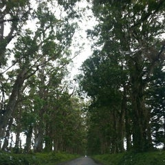 Photo taken at Tunnel Of Trees by ernie e. on 6/19/2015