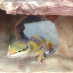 Photo taken at Petco by Leslie W. on 1/11/2013