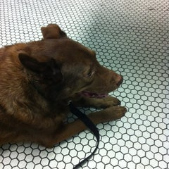 Photo taken at French Quarter Vet by William W. on 1/18/2013
