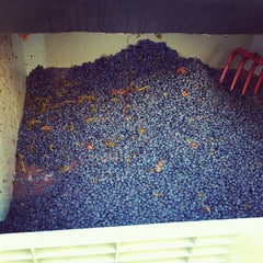 Photo taken at Fifty Barrels Winery by Busy B. on 10/14/2012