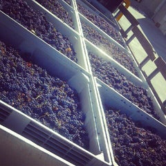 Photo taken at Fifty Barrels Winery by Busy B. on 9/30/2012