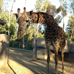 Photo taken at San Diego Zoo by Alla V. on 3/31/2013
