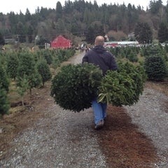 Photo taken at McMurtrey's Red-Wood Christmas Tree Farm by Ann P. on 11/30/2013