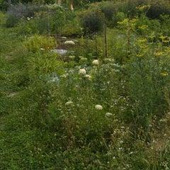 Photo taken at Lennox Street Community Garden by Adrian G. on 7/4/2013