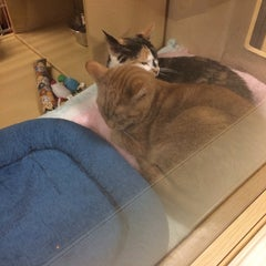 Photo taken at PetSmart by Yaira H. on 12/24/2013