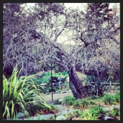 Photo taken at Descanso Gardens by Vicky I. on 1/13/2013