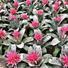 Foto tomada en Mercado de Plantas y Flores  Madreselva por Andrea V. el 6/20/2013