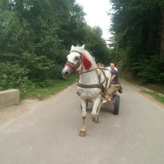 Photo taken at Best Western Bucovina by Adrian D. on 7/29/2015