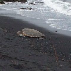 Photo taken at Punalu'u Black Sand Beach by Wayne S. on 11/5/2013