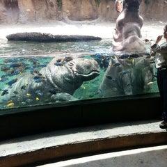 Photo taken at San Antonio Zoo by Michelle C. on 6/15/2013