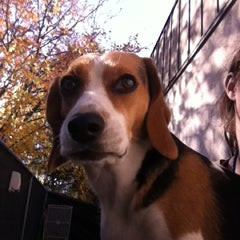 Photo taken at Top Dog Daycare by Keali S. on 11/9/2012
